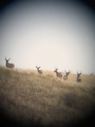 Guided Archery Hunts in Montana