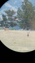 Guided Antelope Hunts in Montana